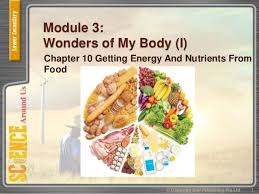 module cuisine lss module 3 chpt 10 nutrients an food