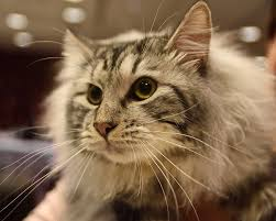 About Pet Cats Is A Cat For Me Cats Guide
