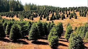 Tannenbaum Christmas Tree Farm Michigan by 100 Christmas Tree Farm Round Glass Christmas Ornaments Merry