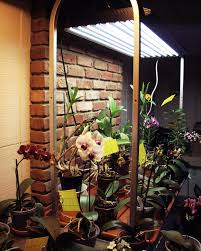 Grow Lamps For House Plants by Orchid Collection Under T5 High Output Fluorescent Grow Lights