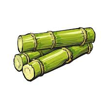 Pile Of Fresh Raw Green Sugar Cane Sketch Style Vector Illustration Isolated On White Background
