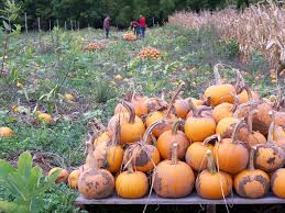 Types Of Pumpkins For Baking by Can I Use Just Any Pumpkin For Baking Food Greenhouse Megastore