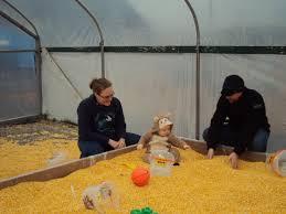 Snohomish Pumpkin Patch Zombie by Thomas Family Farm Road Runner Pet Nanny Blog