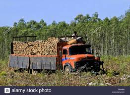 Truck Loaded With Eucalyptus For The Production Of Energy In ... Nissan Titan Warrior Concept Kenworths 600th Australian Truck Rolls Off The Production Line Michigan Supplier Fire Idles 4000 At Ford Plant In Dearborn Dpa An Employee Pictured Of And Machine Production And Delivery Stock Photos Roh Wrestling On Twitter A Peak Inside Bitw Wkhorse Applying For 250m Doe Loan To Build Its W15 Electric Alura Trailer Semi Trailer Export Ghanatradercom Commercial Truck Success Blog Exciting Milestone Isuzu Mobile Tv Group Rolls Out First Us 4k Will Work Hss Manufacturer Orders 70 New Hyster Trucks