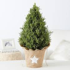Plantable Christmas Trees For Sale by Rethinking Your Christmas Tree 1 Million Women