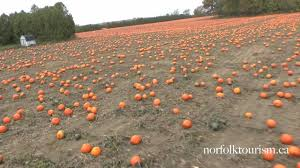 Largest Pumpkin Ever Carved by Norfolk County Canada U0027s Largest Pumpkin Patch Youtube