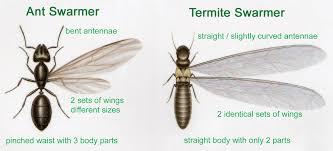 How to Get Rid of Carpenter Ants Tomlinson Bomberger