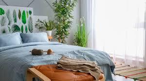 pflanzen im schlafzimmer diese pflanzen eignen sich fürs