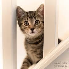 modern cat modern cat magazine home