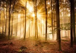 fototapete wald am morgen fototapeten schlafzimmer wandbild sonne licht strahl entspannung m0391