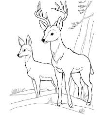 Valuable Ideas Coloring Pages Draw A Deer Pagejpg Full Version