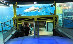 grand aquarium de malo grand aquarium de st malo ladounedesvilles gangandeschs