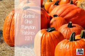 Pumpkin Festival Cleveland Ohio by Central Ohio Pumpkin Patches 2017