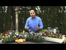 choosing fall flowers for container gardening window boxes