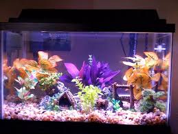 Star Wars Themed Aquarium Safe Decorations by Amazon Com Hydor H2show Atlantis Background With Application Gel
