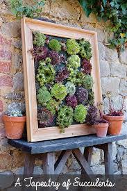 Succulent Living Wall Planter Alpha Farm