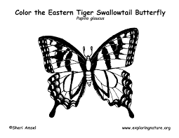 Butterfly Swallowtail Coloring Page