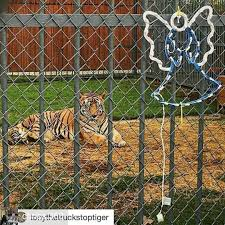 Tonythetruckstoptiger - Hash Tags - Deskgram Live Tiger At Truck Stop Grosse Tete La 180 Out At The In Louisiana Stops Two New Animals Frustrate Activists But Local Infamous Owner Acquires More Exotic Animals For Display Yes There Really Is A Free Tony The Criminal Shdown Wunc Camel Now Famed Truck Stop Outside Baton Rouge Owner Roundup Tiger Back Headlines Another Kelty Jobyronkuhnercom