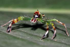 Spirit Halloween Brown Jumping Spider by A Visit From Spirit As Spider U0026 Grasshopper