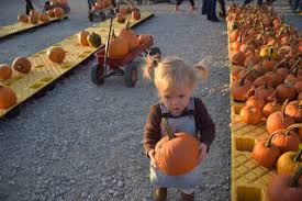 Lehner Pumpkin Farm by Pillow Paws U0026 Little Feet Lehner U0027s Pumpkin Farm