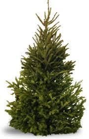 Elgin Il Christmas Tree Farm by Home Siegel U0027s Cottonwood Farm