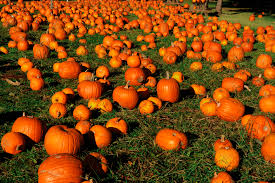 Columbus Ohio Pumpkin Patches by Pumpkin Patches Pick Your Own Pumpkin This Fall