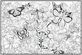 Free Coloring Sheets Adults Ideas Pages Butterfly And Flower Online Fairy Full Size