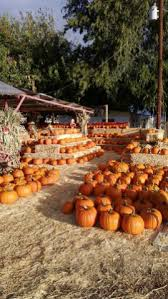 Pumpkin Patch Glendale Co by Find Corn Mazes In Glendale Arizona Tolmachoff Farms In Glendale
