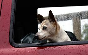 Best Dog Barrier For Car Backseat, SUV Cargo Or Truck Dog Truck Stock Photos Royalty Free Images Takes Semitruck For Joyride Crashes Into Tree And Parked Car Houston Food Foodie Good Hot Crate For Pickup How To Transport Dogs Safely In Quad Eastern Plant Hire Funloving Monster Truck Dog By Destroyer77 On Deviantart Stolen Reunited With Owner Days After It Was Taken The Back Of A Pickup Australia Photo 472518 Filetip Quad Trailerjpg Wikimedia Commons Home
