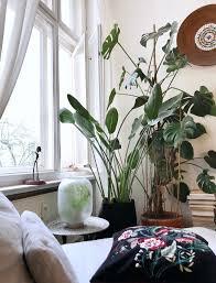 urbanjungle berlin boho wohnzimmer pflanze
