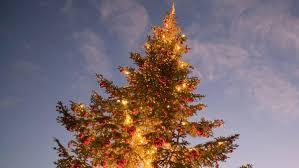 Artificial Silvertip Christmas Tree by California U0027s Prolonged Drought Yields Grinch Like Christmas Tree