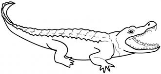 Printable Alligator Coloring Page For Kidz 300x139