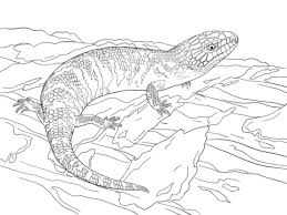 Click To See Printable Version Of Juvenile Eastern Blue Tongued Skink Coloring Page