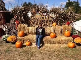 Pittsburgh Area Pumpkin Patches by The Top 10 Best Places To Pumpkin Pick In The Pittsburgh Area