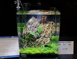 Aquascaping Live! 2016 Small Planted Tanks Out Of Ideas How To Draw Inspiration From Others Aquascapes Aquascaping Aquarium The Art The Planted Plant Stock Photo 65827924 Shutterstock Continuity Aquascape Video Gallery By James Findley Green With River Rocks Aqua Rebell Qualifyings For 2015 Maintenance And Care Guide Outstanding Saltwater Designs 2012 Part 1 Youtube Dennerle Workshop Fish