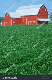Green Corn Fields Red Barn Indiana Stock Photo 101507908 ... Farm House 320 Acres Big Red Barn For Sale Fairfield The At Devas Haute Blue Grass Vrbo Fair 60 Decorating Design Of Best 25 Barns Ideas On Pinterest Barns Country And Indiana Bnsfarms Etc A In Water Color Places To Visit Nba Partners With Foundation For 2015 Conference I Lived A Dairy Farm When Was Girl Raised Calves 10 Michigan Wedding You Have See Weddingday Magazine