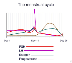 Shedding Uterine Lining During Period by Everything To Know About Ovulation Blog My Baby U0027s Heartbeat Bear