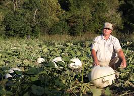 Pumpkin Patch Northwest Arkansas by Dickey Farms Offers Pumpkins Research Farm Experience The Free