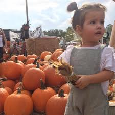Pumpkin Patch Tampa by Hyde Park Village Shopping Hyde Park Tampa