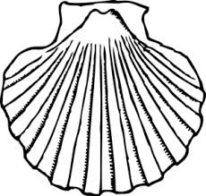 Shells clipart black and white