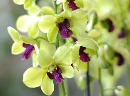 comment soigner les orchidées selon leurs variétés