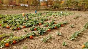 Livermore Pumpkin Patch by 11 Charming Pumpkin Patches In Maine To Visit This Fall