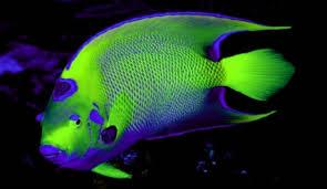 poisson eau douce aquarium tropical les poissons d aquarium