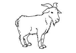 Goat Is Standing Coloring Pages
