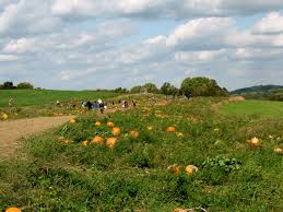 Pumpkin Patch Massachusetts by Fall Harvest Chester Springs Creamery Milky Way Farm