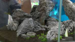 Interzoo 2012: Aquascaping Made By Oliver Knott 1. Aquarium Teil 2 ... Aquascaping Artist Oliver Knott Scapingaquarium Pinterest Schwimmende Stein Steine Im Aquarium By Knott Youtube Aquascapi Sequa Interzoo 2012 Feat Chris Lukhaup Live Part 3 The Island Aquascape Step Aquariology With At The Koelle Zoo Heidelberg New Project Photo Editor Online And Editor Made Teil 1 Inspiration Tips Tricks Love Aquascaping Octopus Aquarium Via Aquac1ubnet