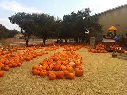 Macdonald Ranch Pumpkin Patch Hours by Pumpkin Patches Abound In San Antonio And Around