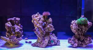 Bare Bottom Aquascape Reef Tank | Aquascaping | Pinterest ... Home Design Aquascaping Aquarium Designs Aquascape Simple And Effective Guide On Reef Aquascaping News Reef Builders Pin By Dwells Saltwater Tank Pinterest Aquariums Quick Update New Aquascape Of The 120 Youtube Large Custom Living Coral Nyc Live Rock Set Up Idea Fish For How To A Aquarium New 30g Cube General Discussion Nanoreefcom Rockscape Drill Cement Your Gmacreef Minimalist 2reef Forum