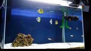 aquarium nano eau de mer trucs et astuces pour démarrer aquarium d eau de mer