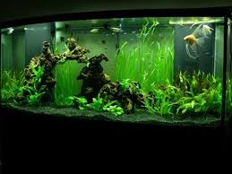 Lava Lamp Fish Tank Walmart by 31 Best Substrate Images On Pinterest Cichlids Sands And Aquariums